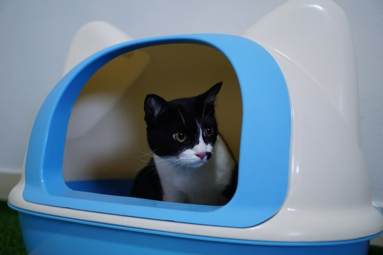 Pet Cat Litter Box