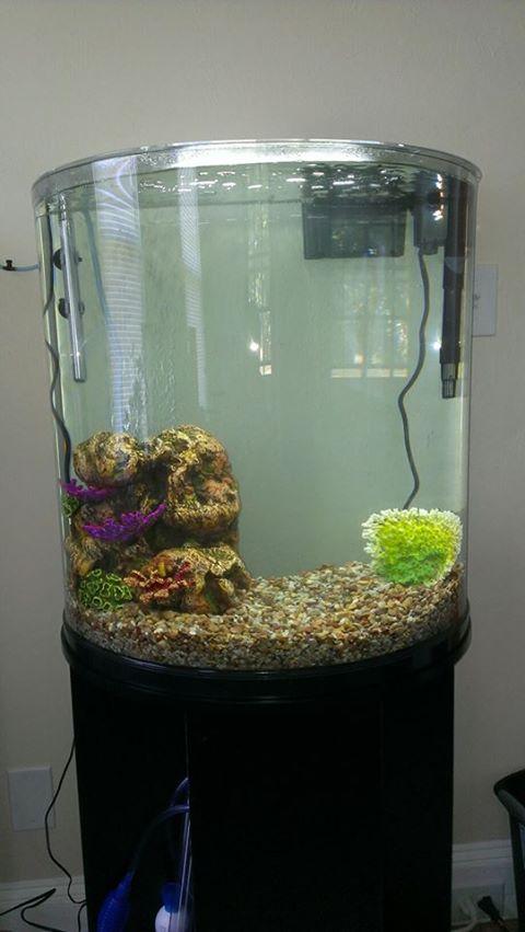 30 gallon fish tank