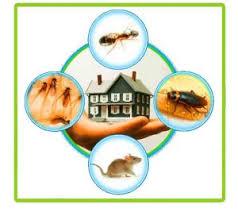 Best Pest control service